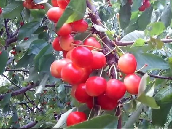 Названа самая полезная июньская ягода