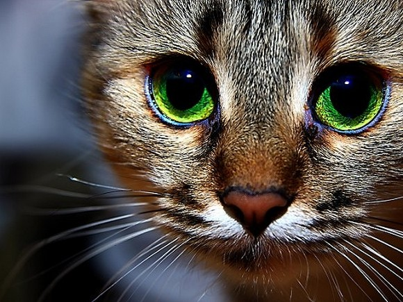 В Петербурге появится профсоюз котов