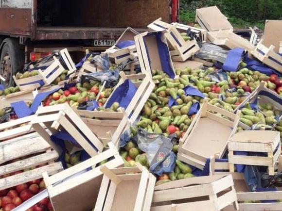 В Псковской области бульдозером раздавили 10 тонн польских груш (видео)