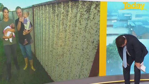 Австралийскому ведущему стало плохо в прямом эфире от нашествия пауков (видео)