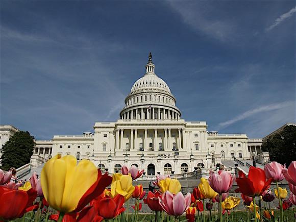 Мэр Вашингтона заявила о возможных беспорядках в день выборов