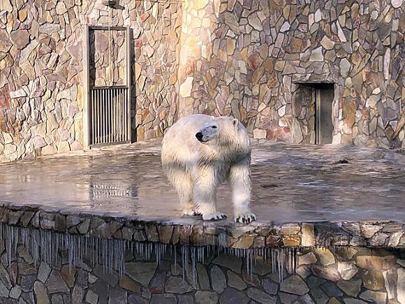 Выходные в Петербурге: новый каток, зоопарк и блокадные экскурсии