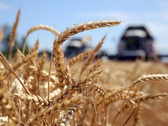 Российским регионам дадут миллиарды рублей на поддержку производителей зерна