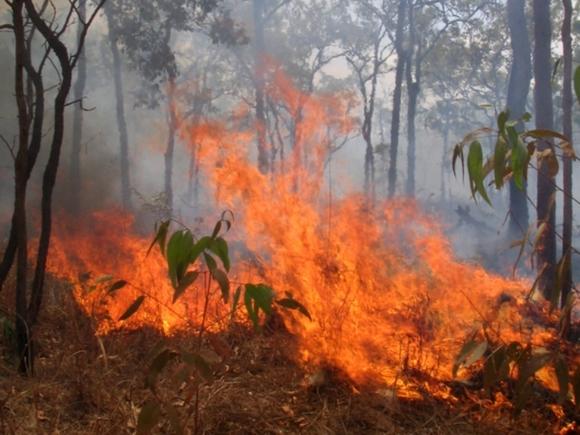 Дым от пожаров в Сибири начал отравлять Монголию