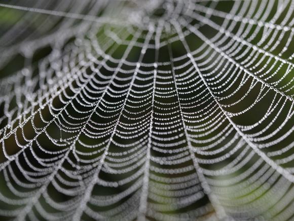 «Абсолютно белое все»: Анапу заволокло паутиной из-за нашествия пауков (видео)
