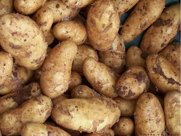 СМИ: В магазинах может появиться картошка «экономкласса»