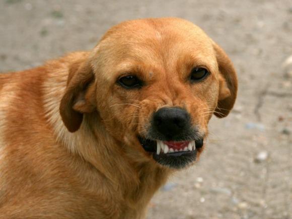 В Бердске возбуждено уголовное дело о нападении собаки на ребенка