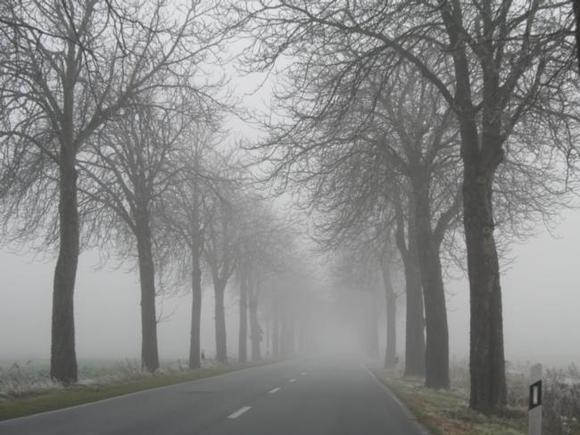 Водителей Москвы призвали к бдительности на дорогах из-за тумана