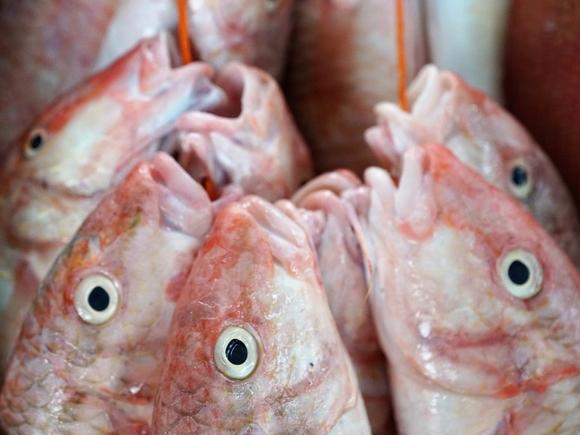 Россия резко сократила поставки рыбы в Китай