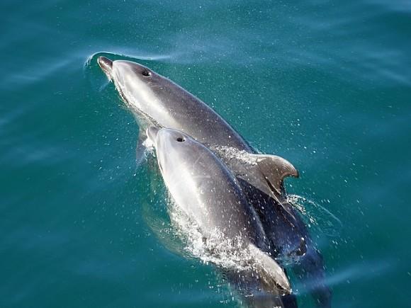В Ирландии заподозрили Путина в причастности к краже знаменитого дельфина