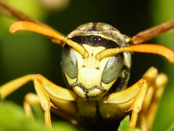 Энтомолог рассказал, как избавиться от осиного гнезда рядом с домом