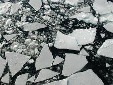 На Камчатке со льдины на реке сняли троих мужчин и собаку