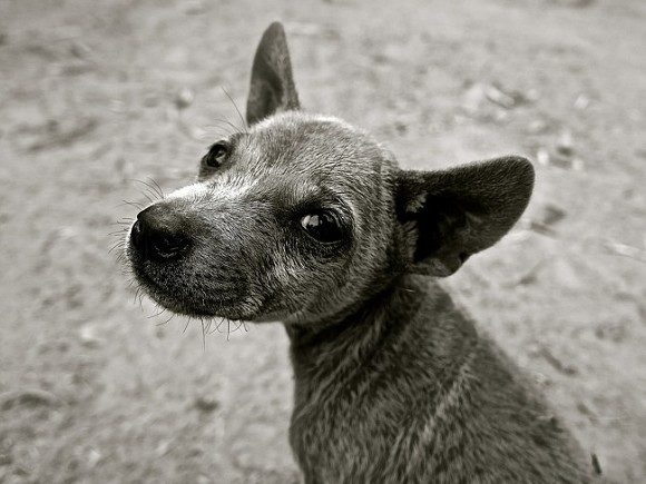 В Кемерово животные пострадали при взрыве в приюте