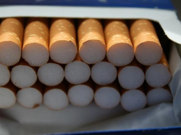 Муха-горбатка может полностью остановить производство сигарет в России