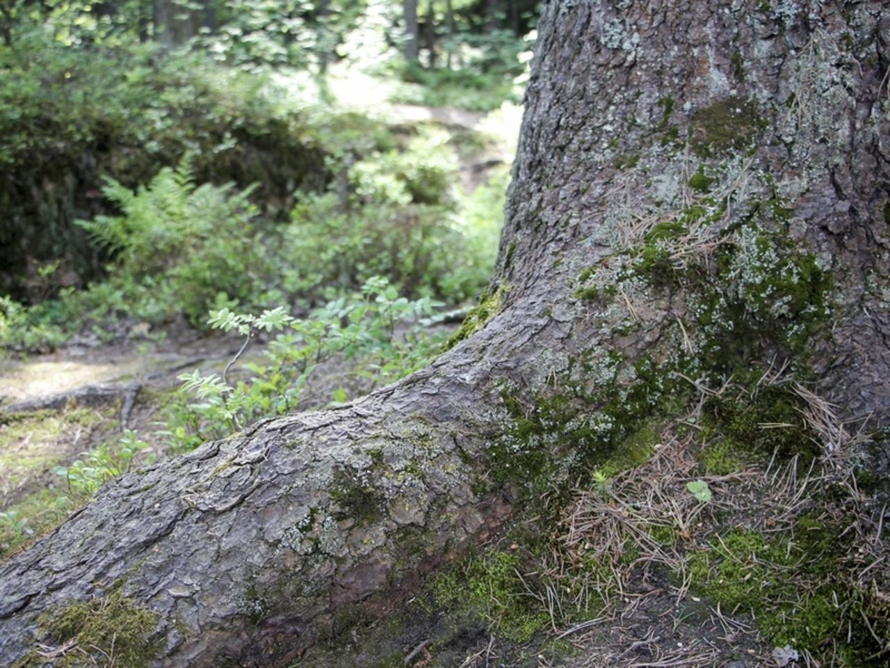 Преподавателя Финансового университета нашли мертвой в лесу в Балашихе - Росбалт